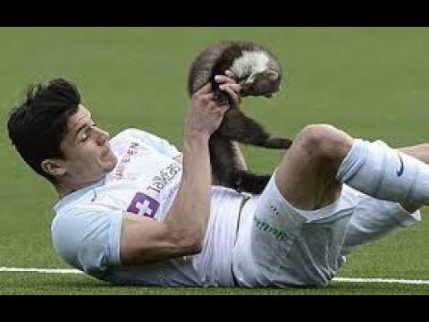 Download 【海外サッカー】走る!走る!走るっ! 動物乱入シーン!【面白動画】Funny animals in football field【Funny football moments】
