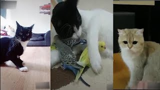 This cats will make you laugh your head off - Funny CAT compilation #1