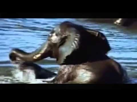 Download Wild Animals Documentary National Geographic Strange Things