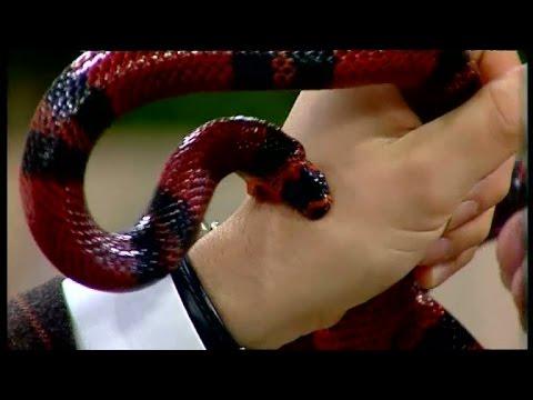 Bloopers: Anders Kraft biten av orm i direktsändning