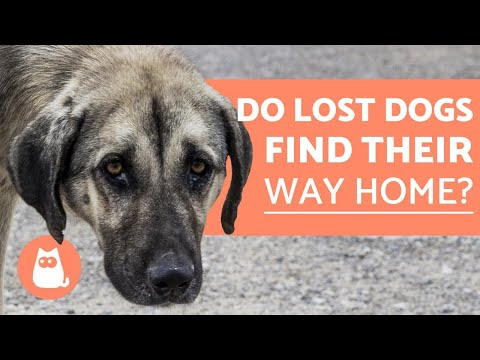 Pet Corner - Do LOST DOGS Find Their Way Home?