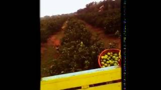 Cortadores Poza Rica..ver... thumbnail