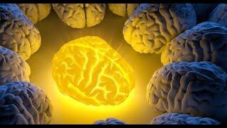 Cette épice régénère les cellules endommagées du cerveau