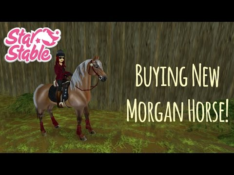 Buying A New Morgan Horse! // Star Stable Online