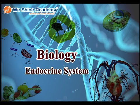 RRB Exam, TNPSC Group 1, Group 2 Exam   Biology - Endocrine System Discussion   We Shine Academy