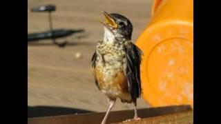 Play Heard A Bird