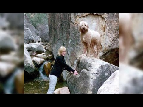 Golden Retriever snuggles with owner on hammock from YouTube · Duration:  21 seconds