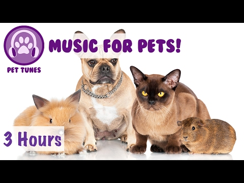 3 HOURS of Music for Pets! Music to Make Your Pet Happy! Perfect for Rats, Guinea Pigs, Ferrets etc