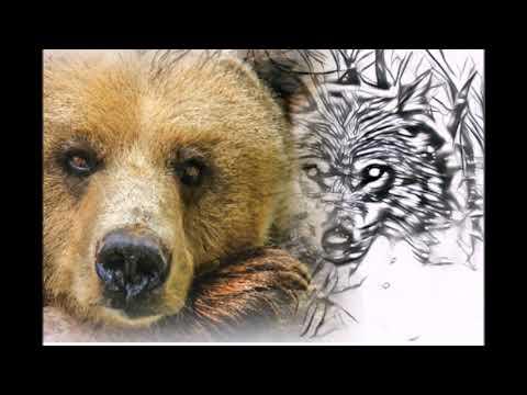 Медведицу окружали голодные волки, она молила спасти ее медвежат