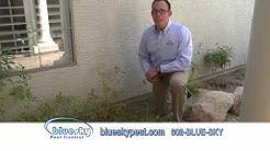Blue Sky Pest Control - Termite Prevention & Elimination