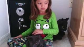 как правильно держать кошку, как кошку брать в руки