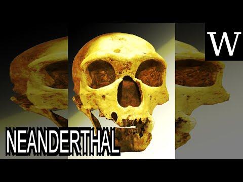 NEANDERTHAL - WikiVidi Documentary