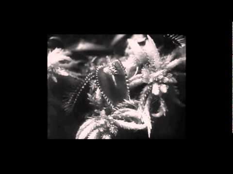 Murcof - Cometa mp3