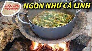 Cách nấu cá phèn um sả ngon như cá linh #namviet