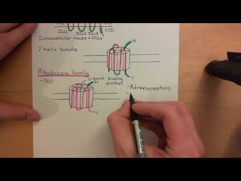 G Protein Coupled Receptors Part 1