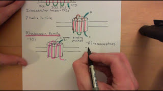 G-protein-couped receptors Part 1