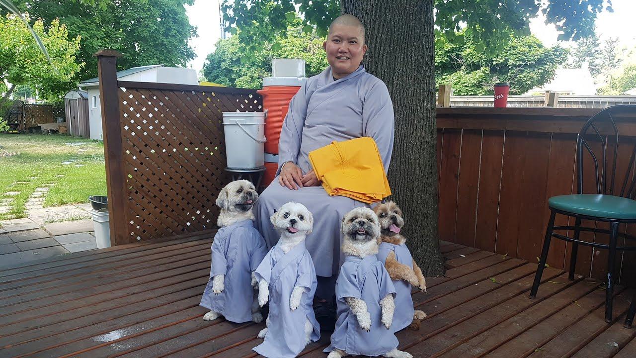 Bốn bé chó tuyệt vời thông minh làm việc từ thiện