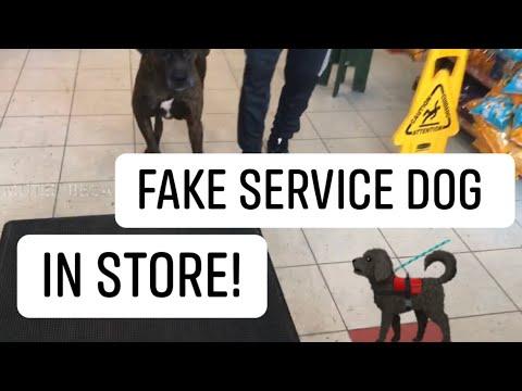Fake service dog in corner store!