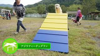 神奈川県松田町にある寄七つ星ドッグラン。 4つの広大なドッグランエリ...