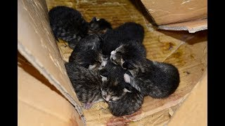 Kitten Rescue at the Abandoned Lincoln Mall