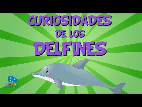 Curiosidades de los Delfines | Videos Educativos para Niños.
