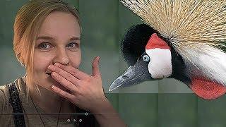 видео Клетки для попугаев, перепелов и других птиц.