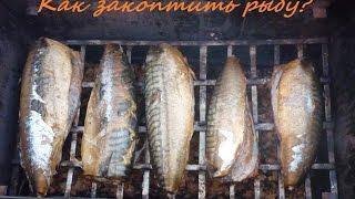 Копчение скумбрии . Как закоптить рыбу. Копчена рыба копчение коптильня Как коптить рыбу