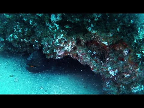 Scuba Diving East Eleven Reef - Volusia County's Natural Reef