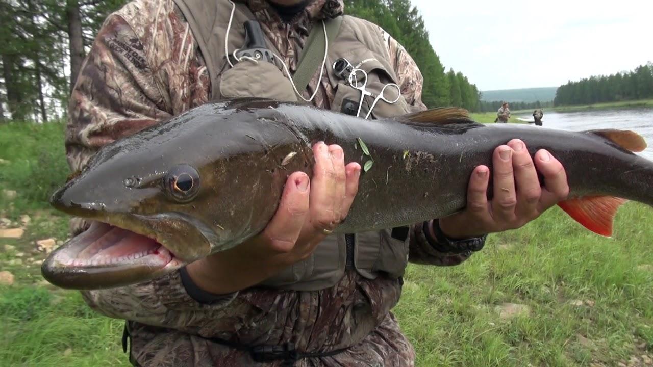 Таежные избы, рыбалка на тайменя и щуку на реках Якутии, ночевка в избушке ЧАСТЬ 2