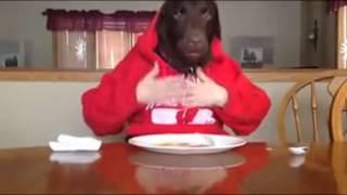 Hài hước động vật: Chết cười với chó sành ăn hơn người