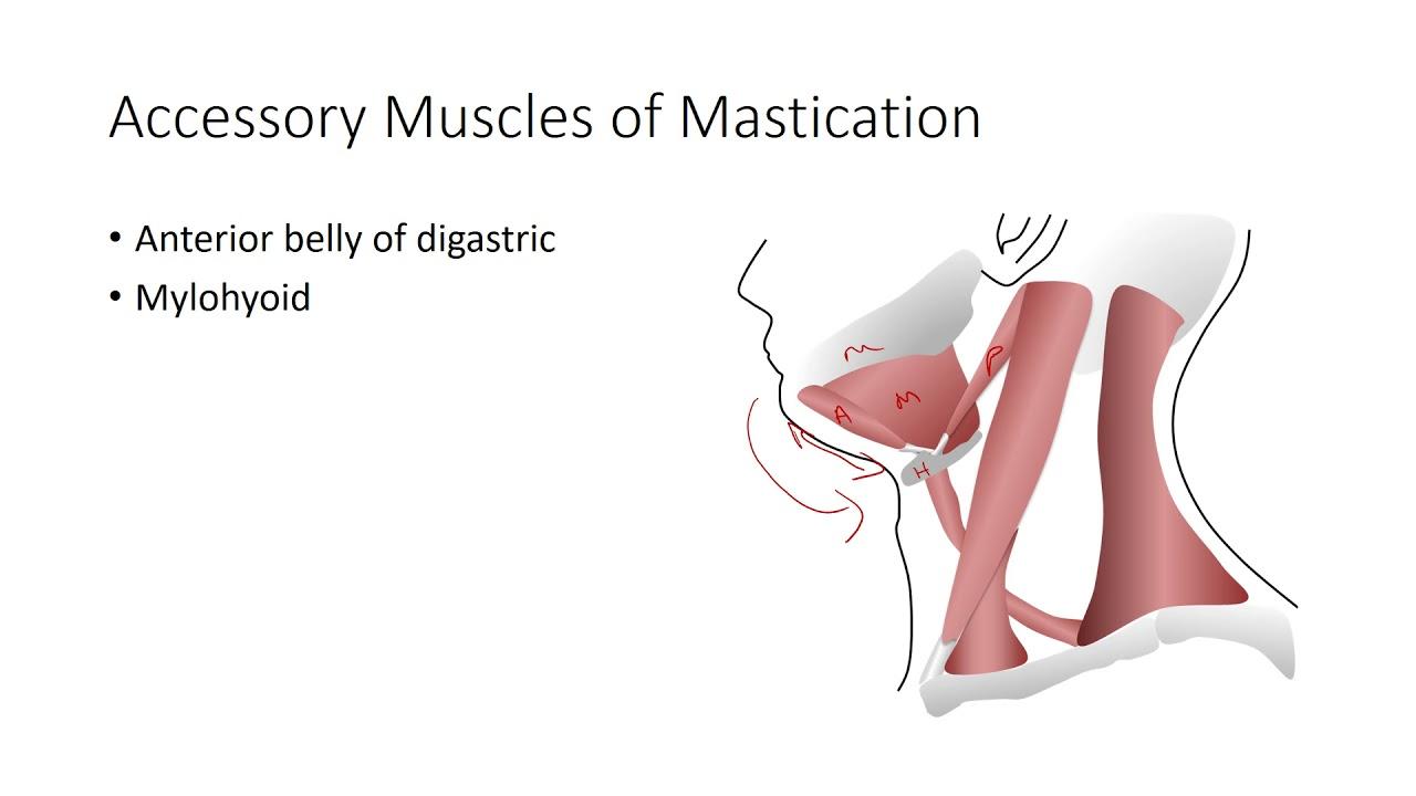 Mandibular Condylar Dislocation - YouTube