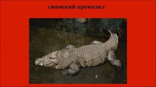 Международная Красная книга. Редчайшие животные. Часть 4