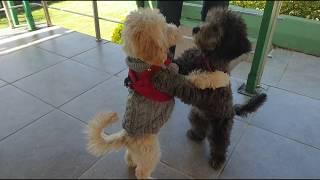İstanbul Köpek Eğitimi Okulu ! [ Temel İtaat Eğitimi ]