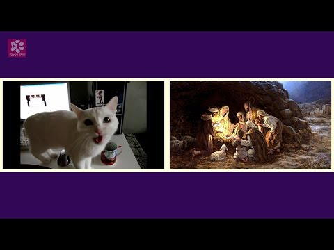 Cats Meowing WHAT CHILD IS THIS [Christmas Song] (Acapella)