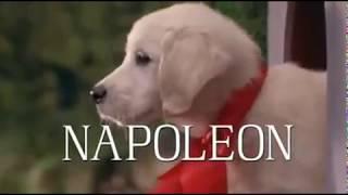 Пес Наполеон Добрый Отличный СЕМЕЙНЫЙ ФИЛЬМ про собаку 1995