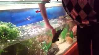 Обслуживание аквариума(Прикалываемся с сомиком., 2015-01-05T00:20:06.000Z)