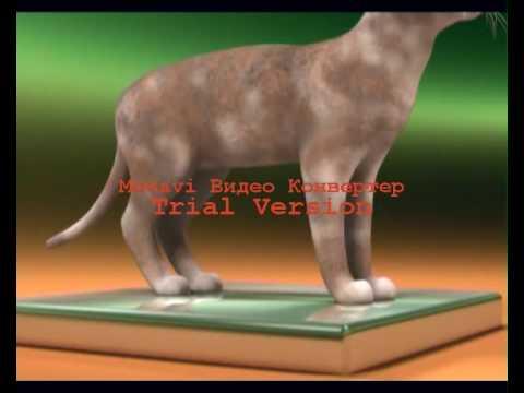 Сноу-шу: фото кошки, цена, описание породы, характер