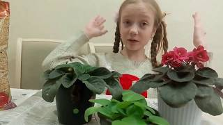 Клонируем цветы , домашние питомцы, домашние растения ,  разcсаживаем фиалки , как ухаживать