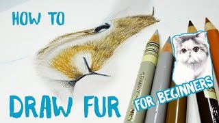 How to Draw Animal Fur With Pencil Crayons - Beginner