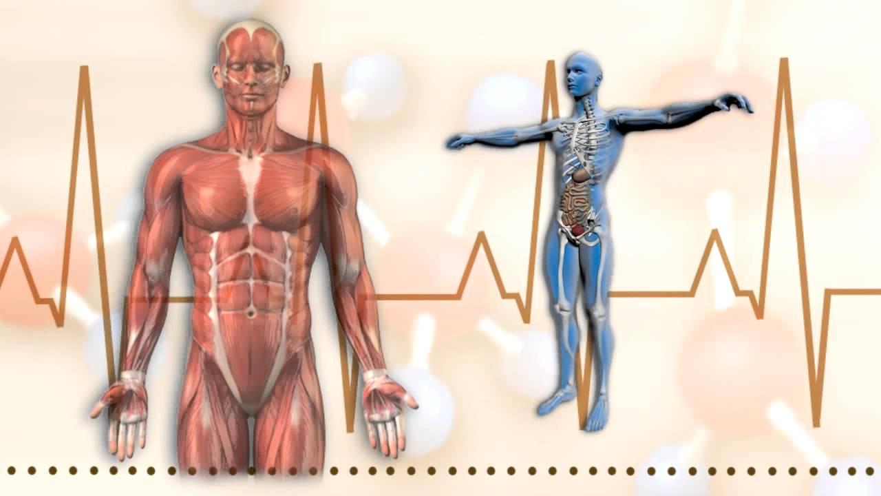 Ciencias Naturales CEUJA 2016: Anatomía humana