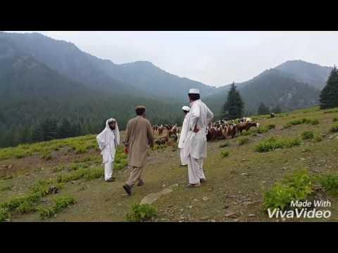 Paktika province district of Gyan... add man. . Samiullah zadran
