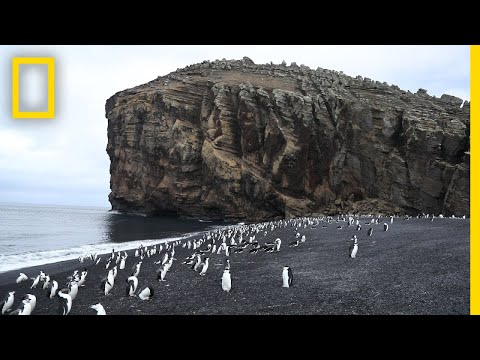 Explore Deception Island, the Active Antarctic Volcano That's Home to Penguins | National Geographic
