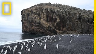 Explore Deception Island, the Active Antarctic Volcano Thats Home to Penguins National Geographic
