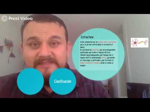 Corte histológico de Riñón from YouTube · Duration:  32 minutes 14 seconds