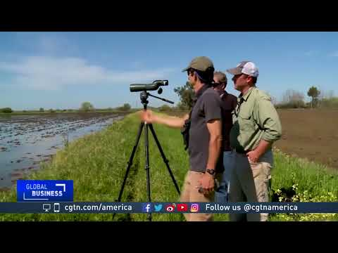 Environmental NGOs Match Migratory Birds With Temporary Wetlands