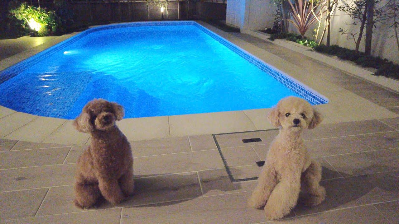 ナイトプールがあるお家で犬とBBQしたら最高でした♪【トイプードル】