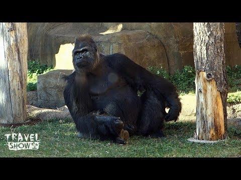 Московский зоопарк | Moscow Zoo | Одно из лучших мест в городе