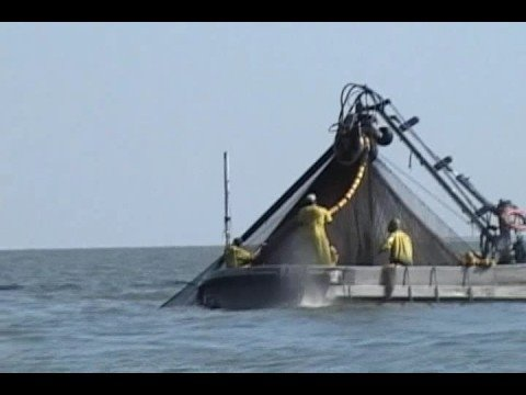 COMMERCIAL FISHING PURSE SEINE IN SOUTH LOUISIANA