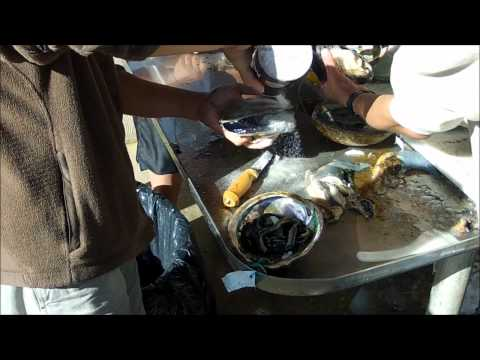 How to Clean Abalone