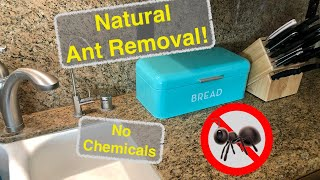 Get Rid of Ants! - Dvorak Method